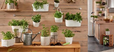 trendy-uraban-gardening