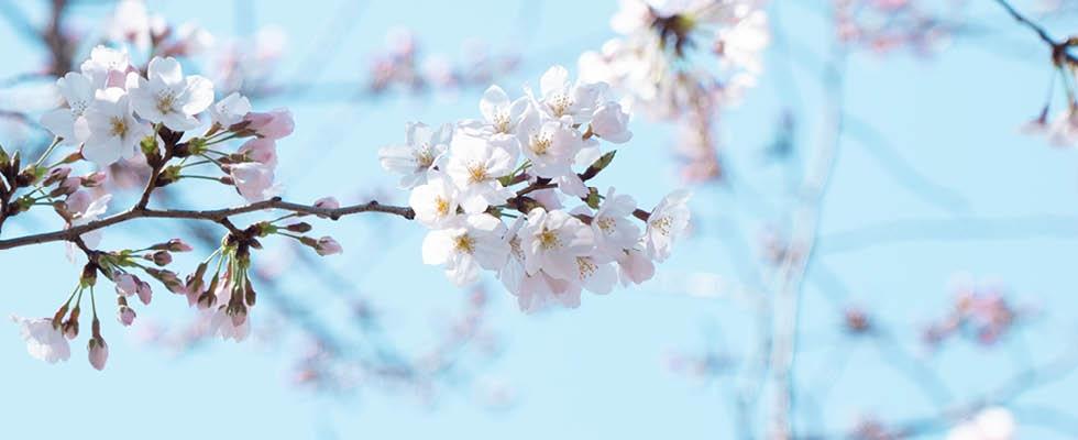 Jar na záhrade