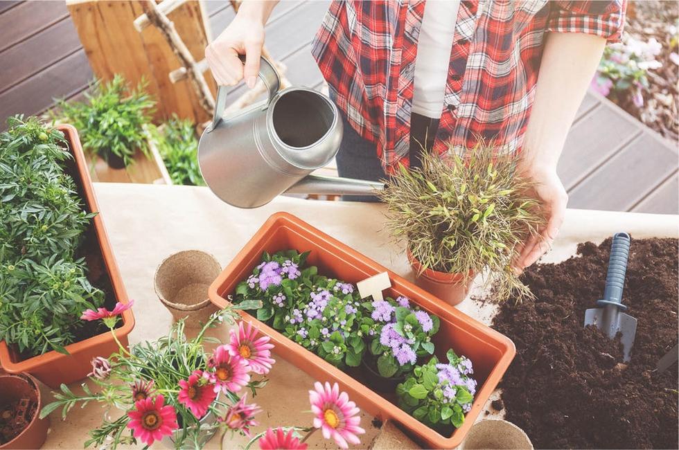 Výsadba květin do zahrady