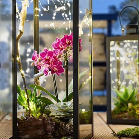 cz-blog-lucerny-s-rastlinami-diy-img1-teaser6