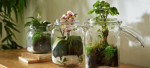 rastlinne terarium-foto