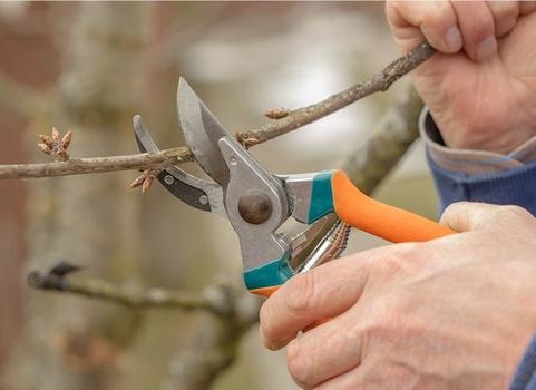Zastřihování stromů - jarní údržba zahrady