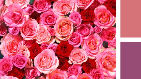 t480_themen-NL_TNL_romantic-rose_teaser-inspiration_kw36-19