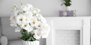 Weiße Blumenvase als modernes Wohnasccessoires.jpg