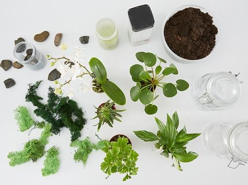 rastlinne-terarium_CZ-teaser2-img1