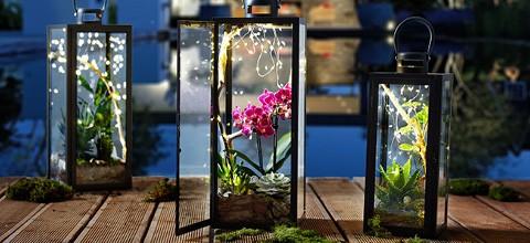 tipy-triky-lucerny-s-rastlinami
