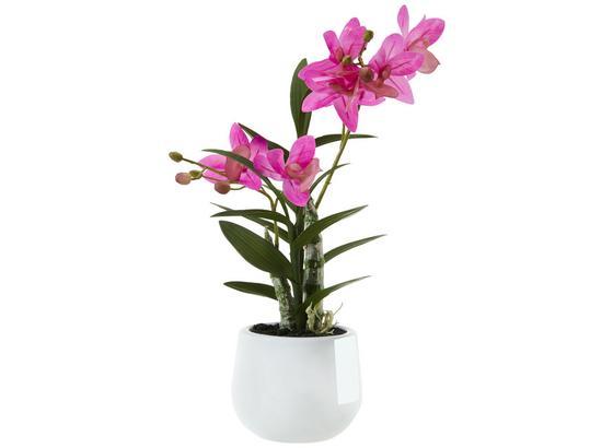 Rostlina Umělá Japonská Orchidej - pink/zelená, Basics, umělá hmota (40cm)