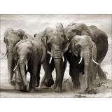 Keilrahmenbild Elefantenherde - Schwarz/Weiß, Holz/Holzwerkstoff (116/84/2,4cm)