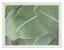 Rám Na Obrazy Mara - barvy zlata, umělá hmota (16,1/21,2/1,8cm) - Modern Living