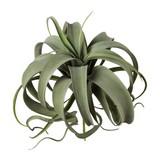 Kunstpflanze Tillandsie 25x28 cm - Grün, Natur, Kunststoff (25/28cm)