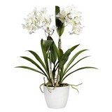 Kunstblume Dendrobie Berta H: 61cm - Lila/Weiß, Basics, Kunststoff (61cm)