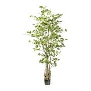 Kunstpflanze H: 155 cm Grün - Schwarz/Braun, Trend, Kunststoff (155cm) - MID.YOU