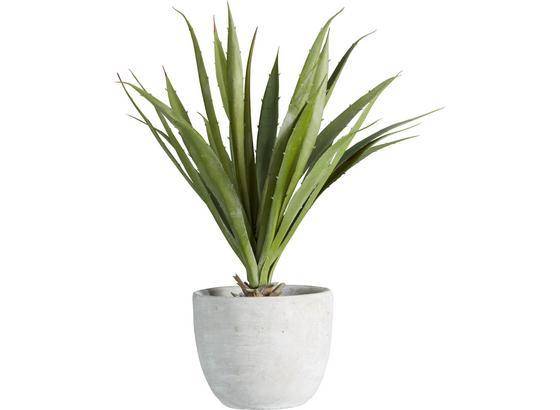 Umelá Rastlina Agave I - zelená, Konvenčný, plast (38 cmcm) - Mömax modern living