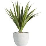 Umelá Rastlina Agave - zelená, Konvenčný, umelá hmota (38 cmcm) - Mömax modern living