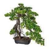 Kunstpflanze Bonsai H: 45 cm Grün - Dunkelbraun/Schwarz, Kunststoff (55/45cm)