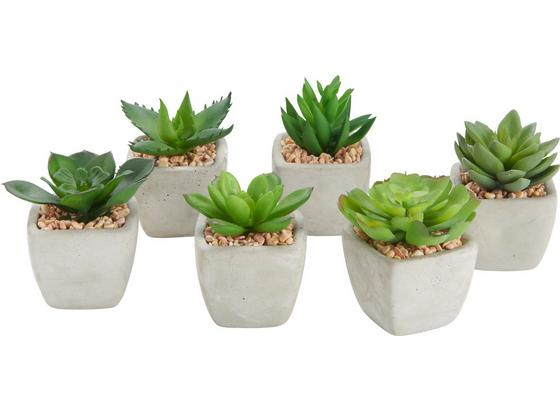 Rostlina Umělá Sukkulente - zelená, Lifestyle, umělá hmota (9/7cm)
