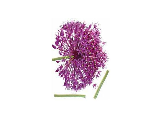 Nálepka Dekorační 46367 Kds 50x70 Onion Flower - vícebarevná, umělá hmota (50/70cm) - Mömax modern living