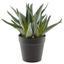 Rostlina Umělá Aloe - zelená, Basics, umělá hmota (34cm)