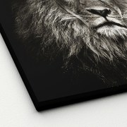 Keilrahmenbild Lionhead - Weiß/Grau, Basics, Holzwerkstoff (40/40/2cm)