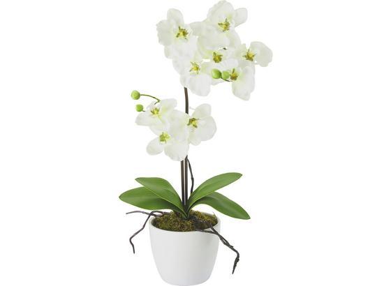 Rostlina Umělá Orchidee - bílá/pink, kov/textil (11/60cm) - Mömax modern living