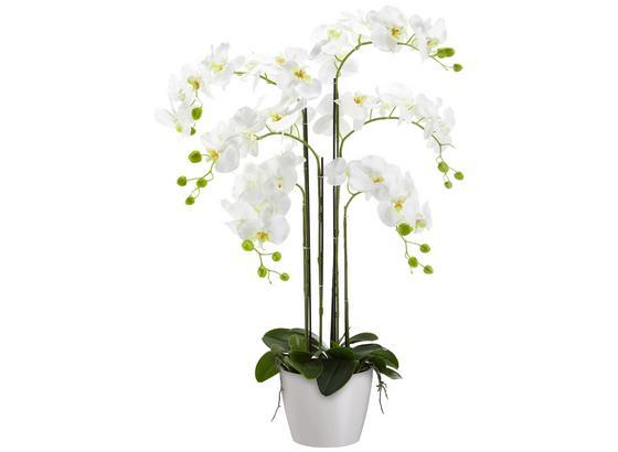Umelá Rastlina Phalänopsis - biela/zelená, plast (90 cmcm)