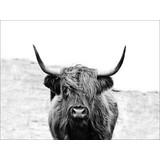 Keilrahmenbild Scott Highland Cattle II - Grau, Basics, Papier/Holzwerkstoff (116/84/2,4cm)