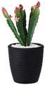 Umelá Rastlina Kaktus - čierna/zelená, umelá hmota (10/24,5cm) - Mömax modern living
