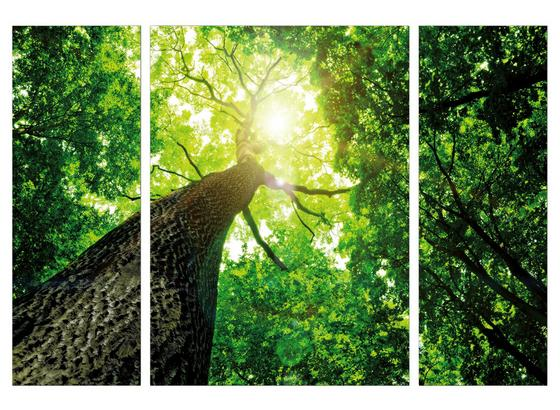 Obraz S Napínacím Rámem Marius - zelená/hnědá, kompozitní dřevo/textil (116/80/1.8cm)
