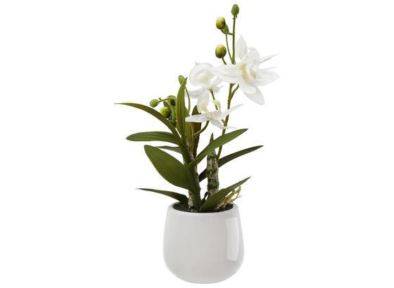Rostlina Umělá Japonská Orchidej - bílá/zelená, Basics, umělá hmota (32cm)