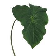 Kunstblume L:75 cm - Grün, MODERN, Kunststoff (75cm)