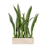 Umelá Rastlina Vitus - zelená, umelá hmota (58cm)