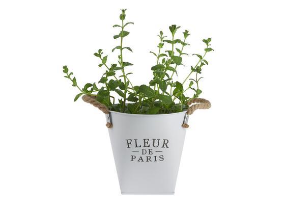Kvetináč Fleur De Paris - biela, Romantický / Vidiecky, kov (18,5cm) - Mömax modern living