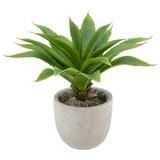 Umelá Rastlina Agave Ii - zelená, Konvenčný, umelá hmota (30cm) - Mömax modern living