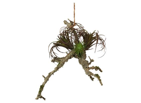 Umelá Rastlina Sukkulente Auf Ast I - sivá/zelená, Natur, plast (23/19cm)