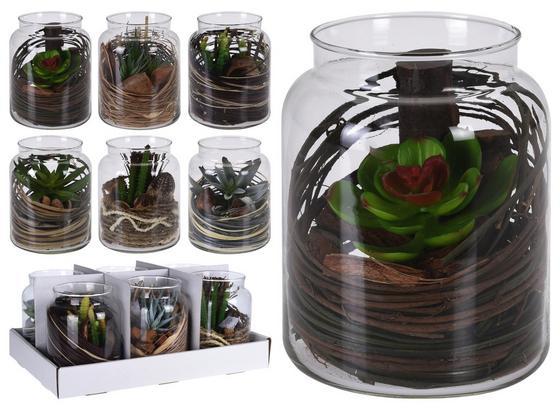 Sukkulente Florin - Transparent/Braun, MODERN, Glas/Kunststoff (12/16cm)