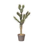 Kunstpflanze Kaktus H: 73 cm Grün - Dunkelgrün, Basics, Kunststoff (73cm)