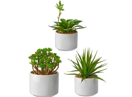 Rostlina Umělá Helena - zelená, umělá hmota (18cm) - Mömax modern living