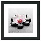 Bild Stones And Beauty I - Pink/Schwarz, MODERN, Holzwerkstoff (34/34/1,9cm)
