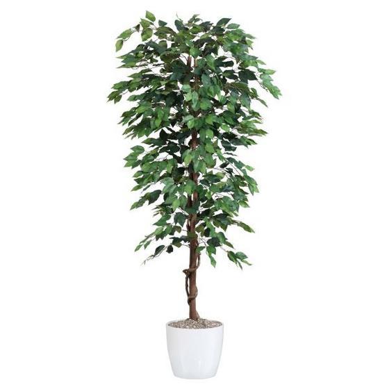 Rostlina Umělá Benjamina - zelená/hnědá, textil/umělá hmota (180cm) - Mömax modern living
