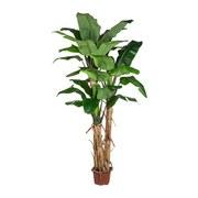 Kunstpflanze Palme H: 280 cm Grün - Schwarz/Braun, Basics, Kunststoff (280cm) - MID.YOU