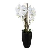 Kunstpflanze Orchidee H: 120 cm Weiß - Schwarz/Weiß, LIFESTYLE, Keramik/Kunststoff (120cm) - MID.YOU