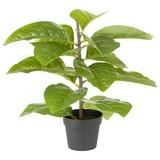 Kunstpflanze Bastri - Schwarz/Braun, KONVENTIONELL, Kunststoff (25/36cm) - Ombra