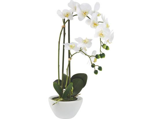 Rostlina Umělá Marie - bílá/zelená, kov/textil - Mömax modern living