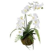 Orchidee Farn Arragement Susi - Weiß/Grün, Natur, Kunststoff (65cm)