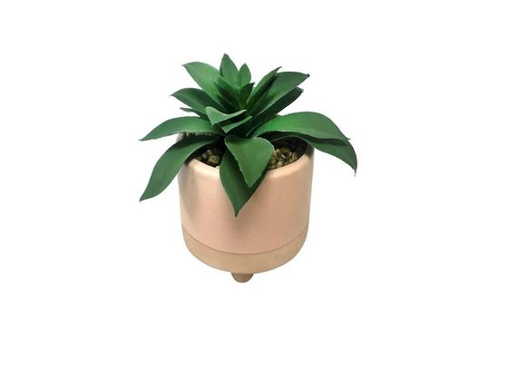 Umelá Rastlina Sukkulente - zelená/ružová, plast/keramika (10,5/13cm) - Mömax modern living