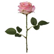 Rose Samantha Rosa - Rosa/Grün, Basics, Kunststoff/Textil (36cm)