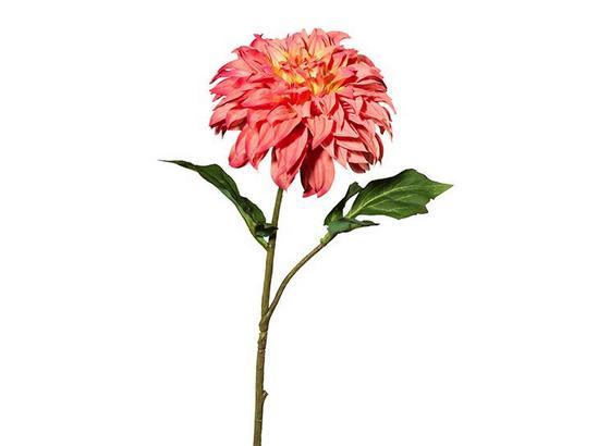 Dahlie Susi - Hellrosa/Rosa, MODERN, Kunststoff (54cm)