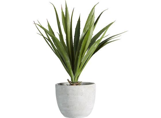 Rostlina Umělá Agave I - zelená, Konvenční, umělá hmota (38 cmcm) - Mömax modern living