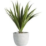 Umelá Rastlina Agave Ii - zelená, Konvenčný, umelá hmota (38 cmcm) - Mömax modern living