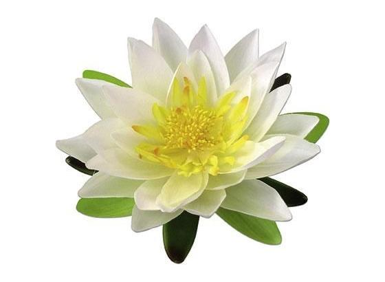 Dekoračný Kvet Lotos - krémová, umelá hmota (15cm) - Mömax modern living